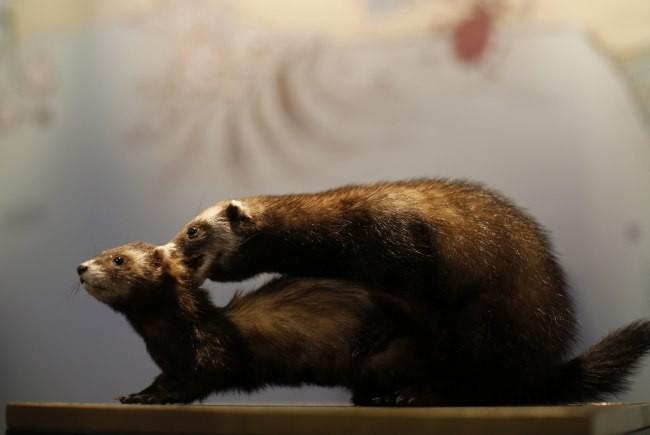 Интим животных (10 фото)