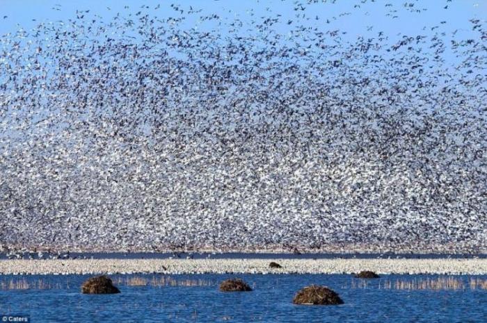 Что такое миллион птиц (4 фото)