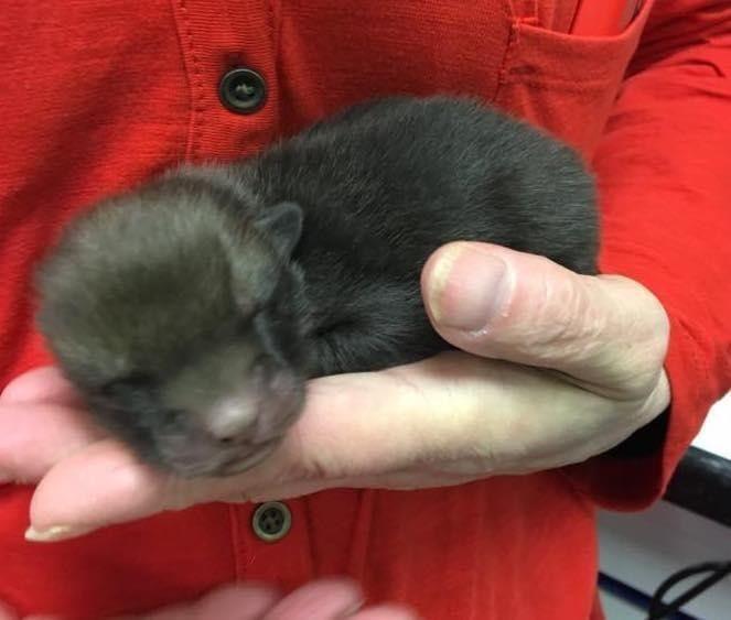 Мужик нашел под старым матрасом пять странных щенков (7 фото)