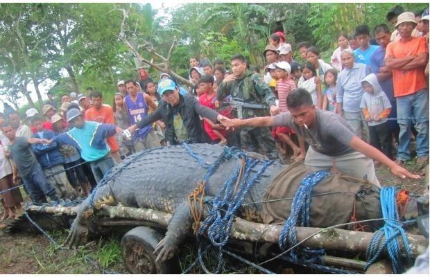 Громадный крокодил (4 фото)