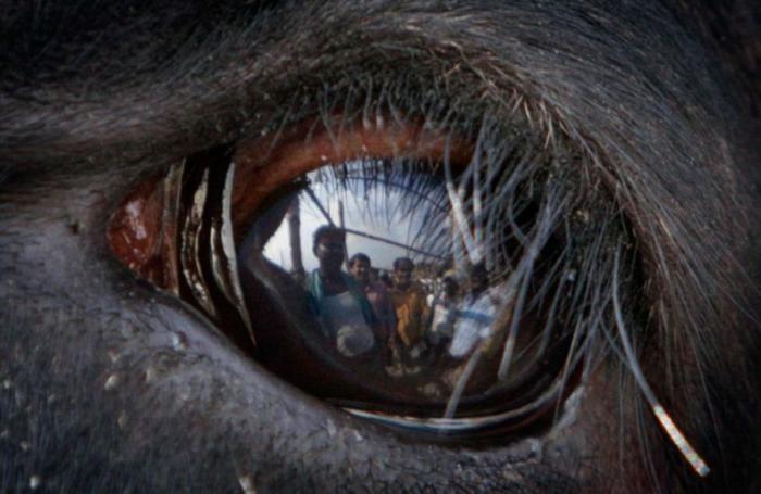 Глаза животных (12 фото)