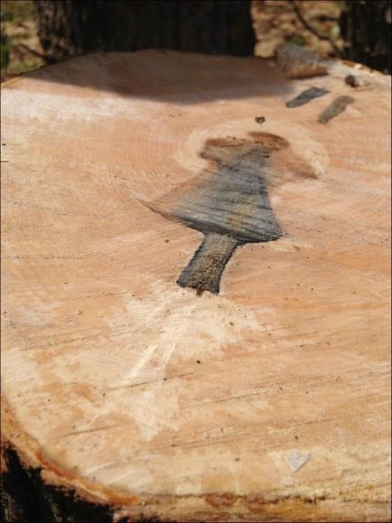 Интересный сюрприз внутри дерева (4 фото)