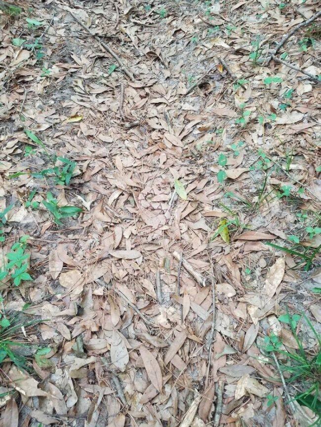 Попробуйте найти змею на этом фото (2 фото)