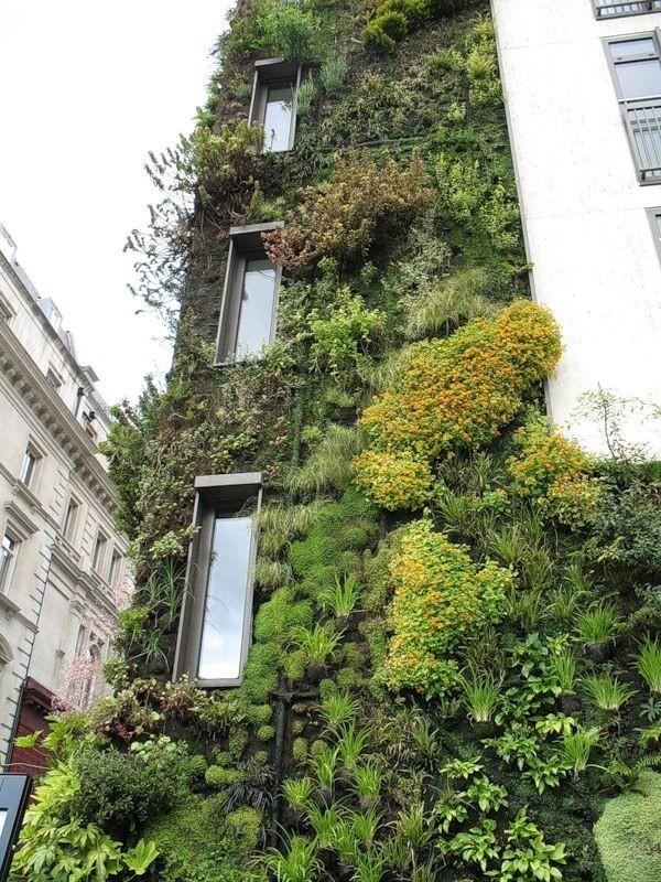 Вертикальные сады (28 фото)