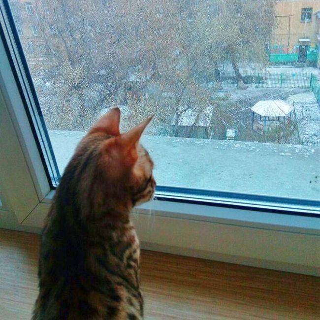 Майские снегопады в Сибири (27 фото)