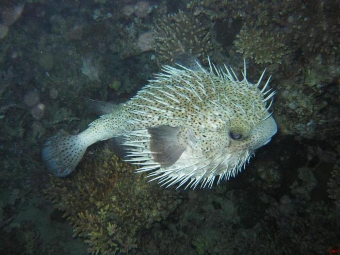 Самые ядовитые рыбы на свете
