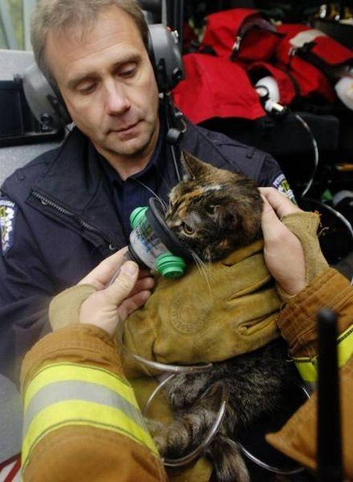 Пожарные и спасенные ими животные (47 фото)