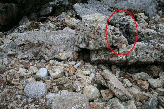 Найдите снайпера на этом фото (2 фото)