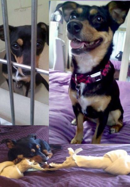 Животные в приюте и дома (33 фото)