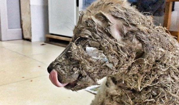 Щенок над которым издевались дети, измазавшие его клеем, был спасен (13 фото)