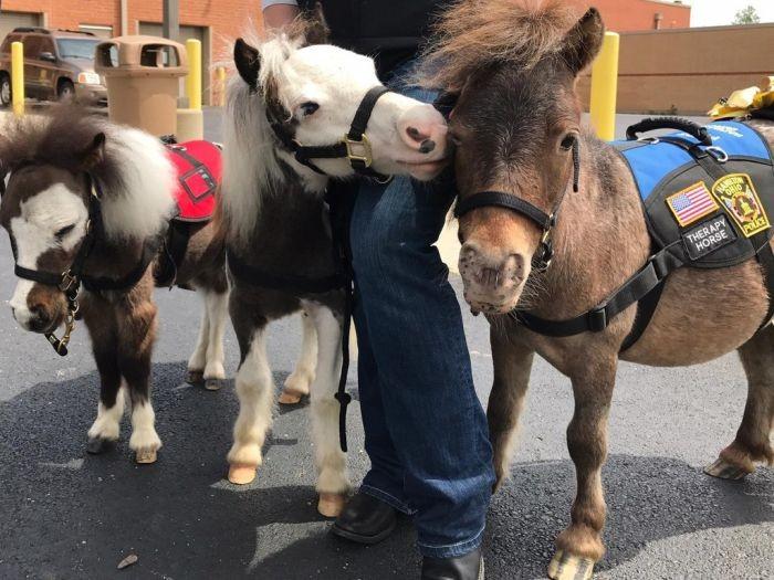 Миниатюрные лошади помогают пассажирам аэропорта бороться с боязнью перелетов (5 фото)