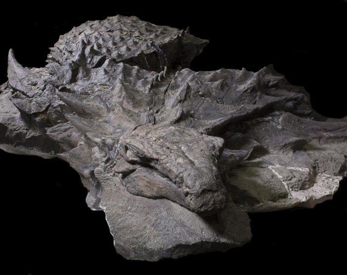 В музее показали останки нодозавра, которым 110 миллионов лет (6 фото)