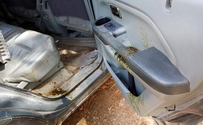 Медведь закрылся в автомобиле (5 фото)