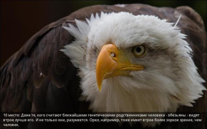 Зрение у животных (10 фото)