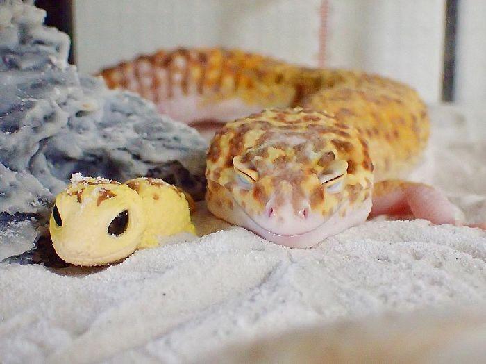 Улыбающийся геккон (9 фото)