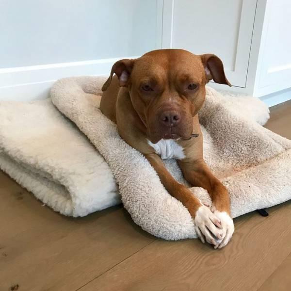 Собака, прожившая 8 лет на цепи, обрела любящего хозяина (9 фото)