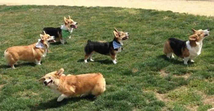 Забавные собачки (22 фото)