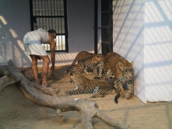 Домашний зоопарк в арабской стране (10 фото)