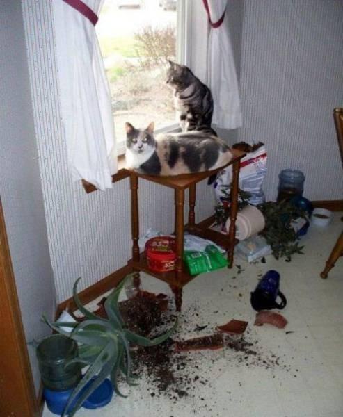 Неприятности случаются со всеми (53 фото)