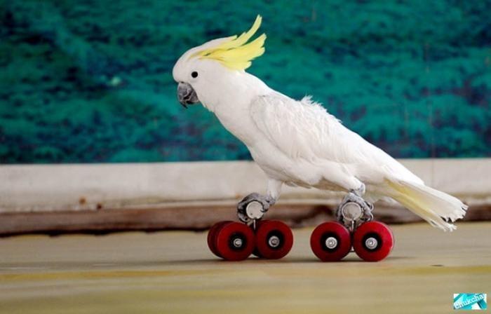 Забавная птичья Олимпиада (13 фото)