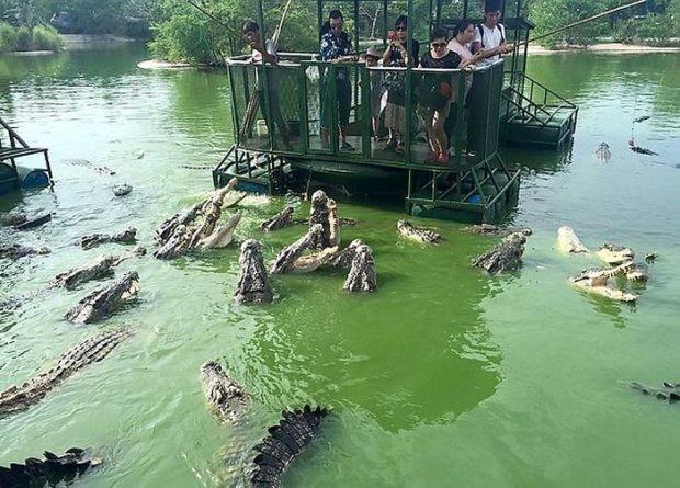 Крокодиловая ферма в провинции Чонбури для любителей острых ощущений (5 фото)