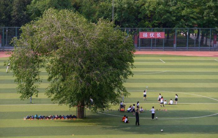 Дерево посреди школьного стадиона (3 фото)