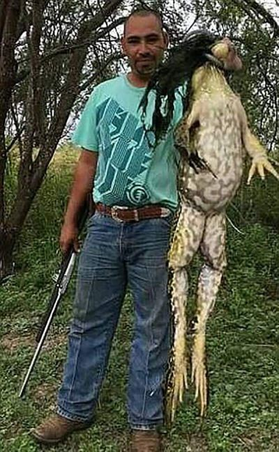 Пользователей сети смутила огромная лягушка (2 фото)