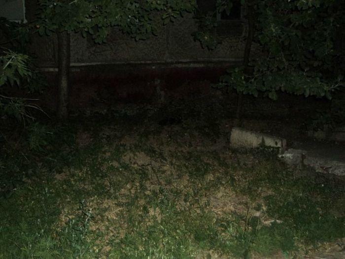 Найди кота на фото (48 фото)