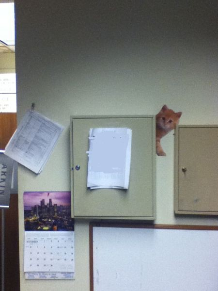 Офисный прикол с котятами (9 фото)