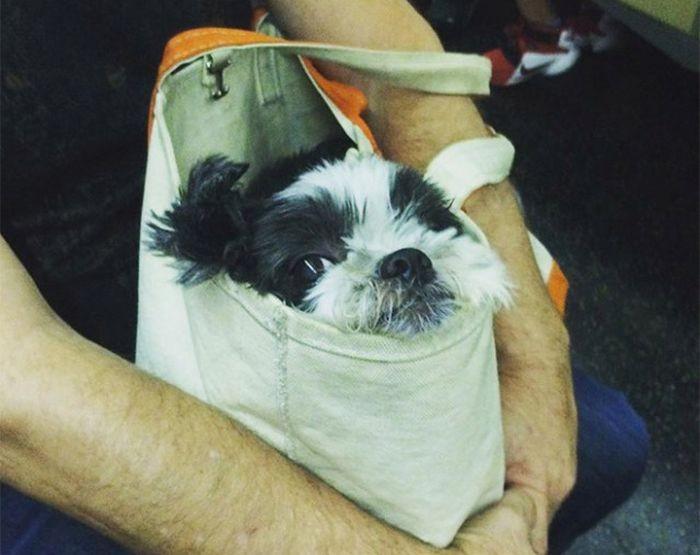 Находчивым хозяевам собак все запреты нипочем (13 фото)