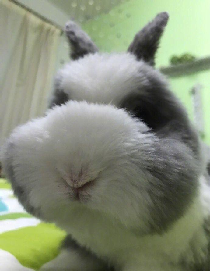 Сложно поверить, что на этих фотографиях настоящий кролик (6 фото)
