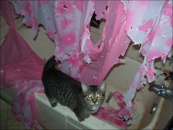 Что сделал кот с ванной (3 фото)