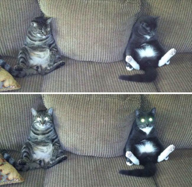 Странное поведение кошек (29 фото)