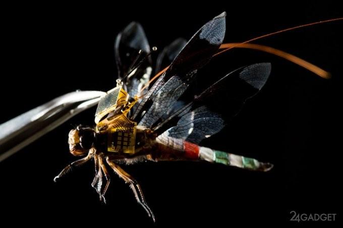 Генно-модифицированная стрекоза-киборг (5 фото)