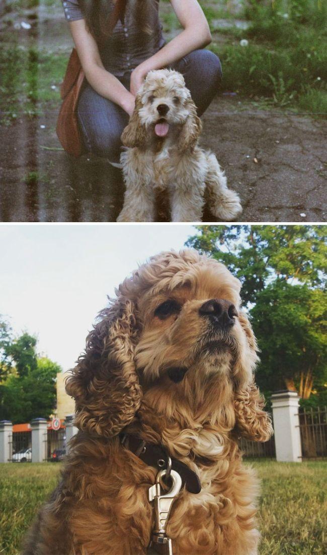 Вчерашние щенки, ставшие взрослыми собаками (25 фото)