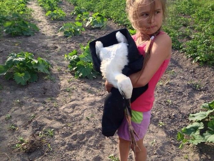 Белорусские спасатели вернули в гнездо выпавшего аиста (7 фото)