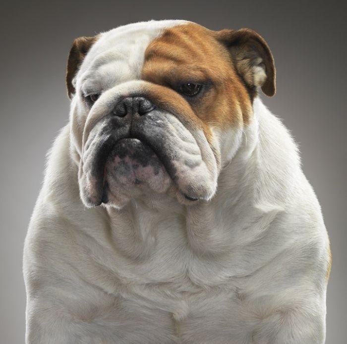 Удивительные портреты собак (15 фото)
