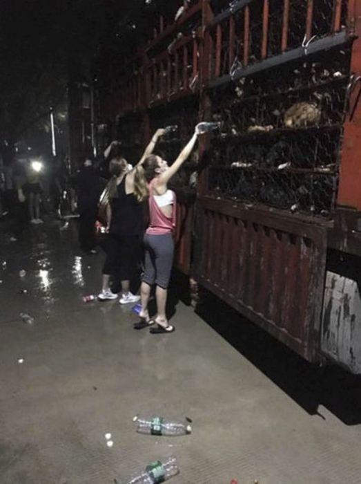 В Китае спасли 1000 собак, которых везли на убой (9 фото)