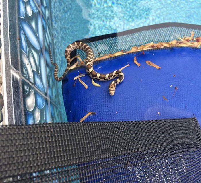 Это изобретение заботится о животных, застрявших в водоемах (11 фото)