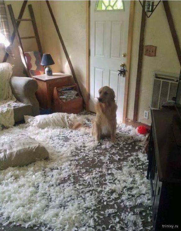 Собака-проказница (7 фото)