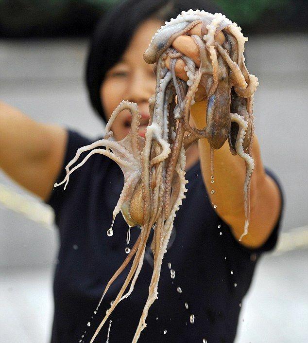 Южнокорейские гурманы насладились живыми осьминогами (7 фото)