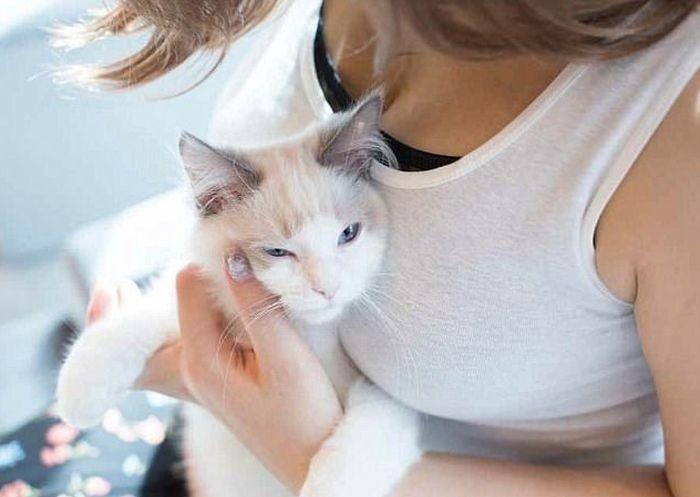 Кошки тоже без ума от женской груди (11 фото)