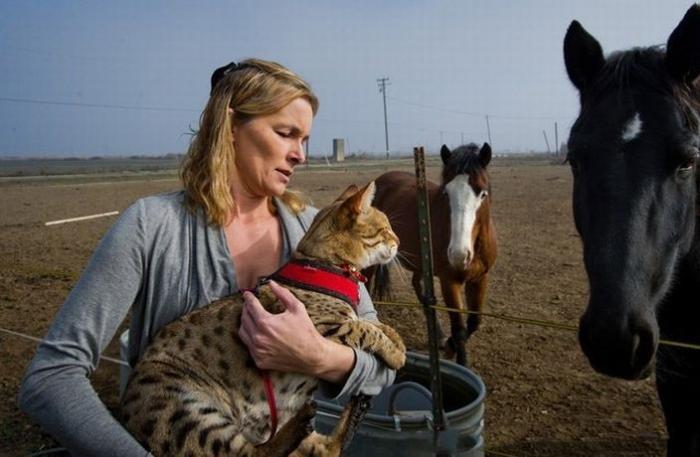 Самый длинный в мире кот (9 фото)