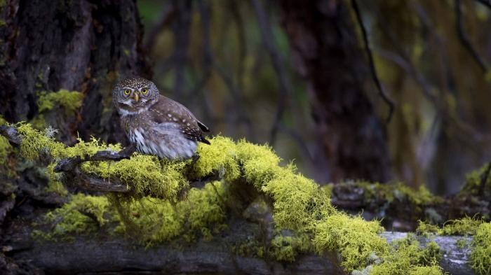 Удивительные фото птиц с конкурса Audubon Photography Awards 2017 (21 фото)