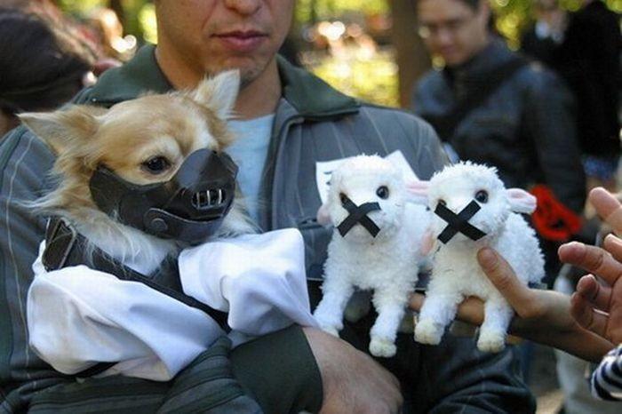 Киноманы, владельцы собак (14 фото)