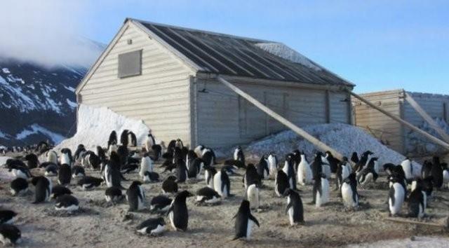 В Антарктиде найдена картина, которой более 100 лет (4 фото)