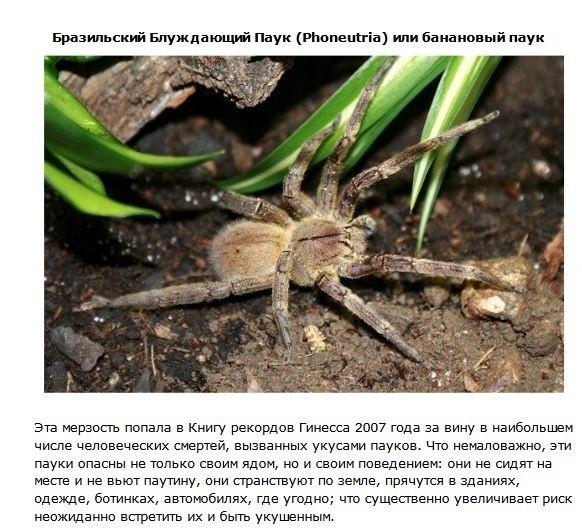 ТОП-10 самых ядовитых животных в мире (10 фото)
