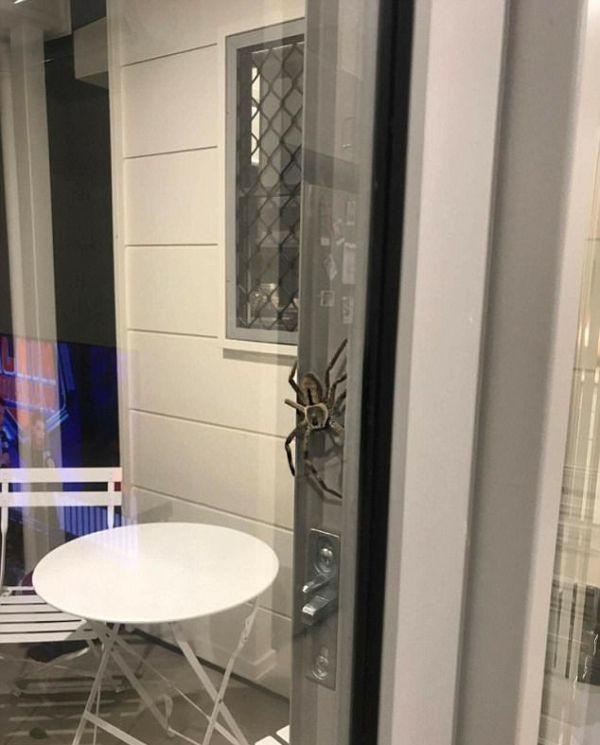 Огромный паук испортил ужин австралийской пары (3 фото)