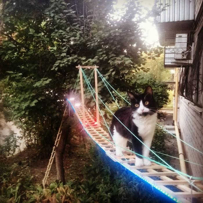 Парадный вход для кошки (8 фото)