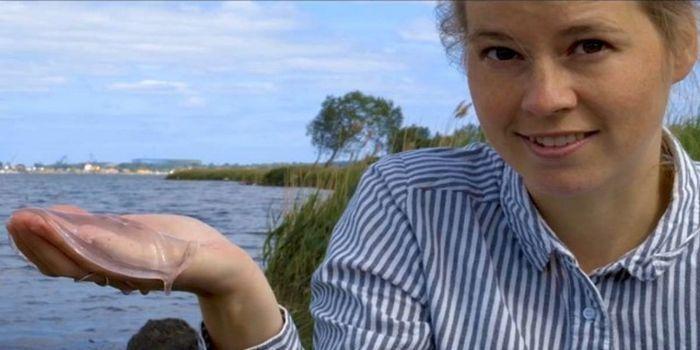 Как превратить медузу в чипсы с помощью спирта (4 фото)